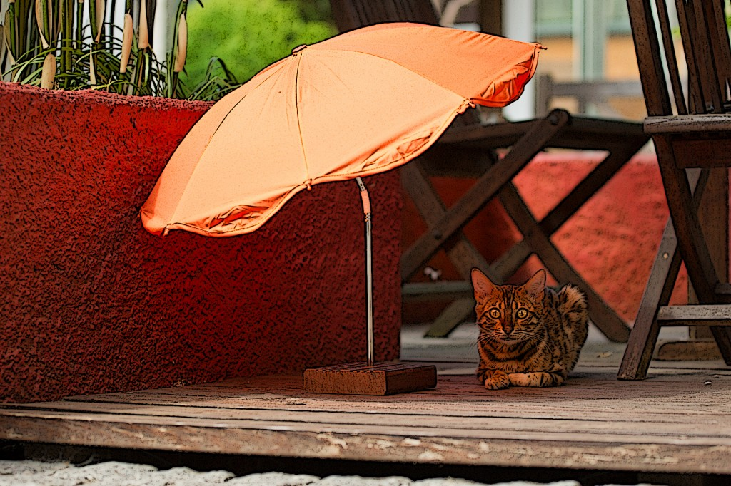 Cat with it´s own Beach Umbrella